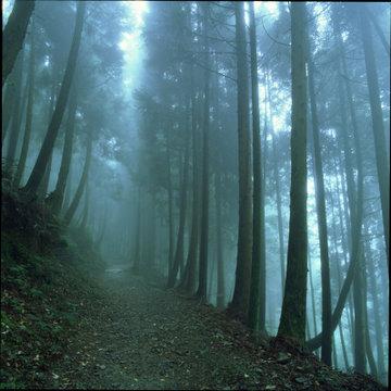 觀霧檜山巨木步道