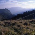 麟趾山北坡植被與東埔山