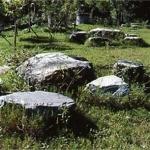 梅山原生種植物