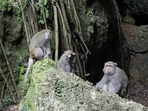 The Taiwan Macaque monkeys are the most visible wild life at the Shoushan Park. Visitors are asked to not feed them or to interfere with their natural lifestyle.