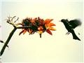 刺桐花開滿枝紅,燃燒如火喚春來