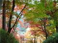 日本雲仙公園