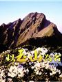 《以玉山為名(DVD)》封面