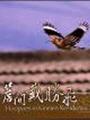 《簷間戴勝飛(DVD)》封面