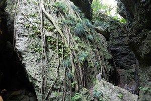 壽山國家自然公園-打狗山上的珊瑚礁