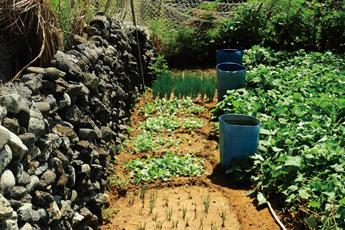 澎湖群島上的綠洲:「菜宅」