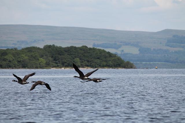 力促政府改變洛蒙德湖國家公園(Loch Lomond national park)的管理方式