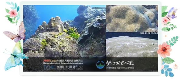 婆娑之洋,美麗之島─2017珊瑚礁生態保育週,再現墾丁礁點