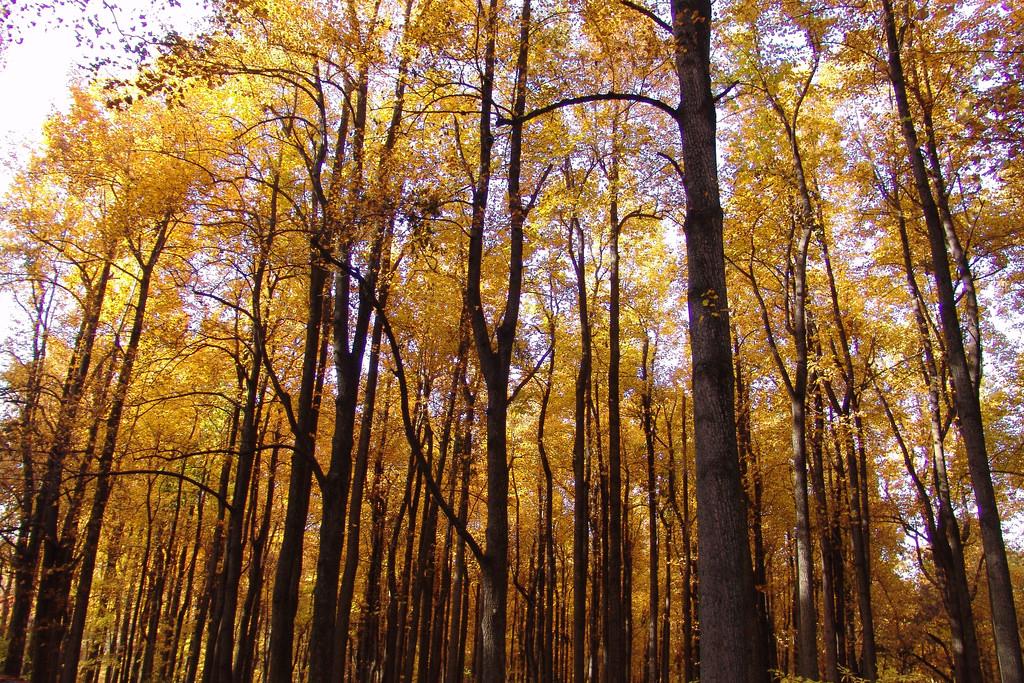 這些樹會從國家公園中消失嗎?