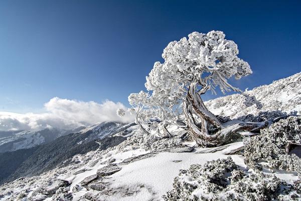 雪季登山安全教育─高山症的預防與治療