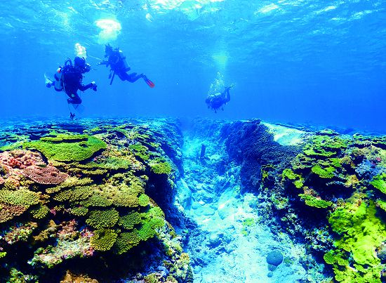 Clean sea water is the basic condition for coral growth. / Huai Hsu