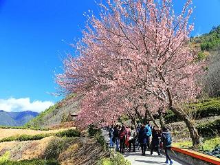 愛在櫻花盛開時:到國家公園賞櫻一定要知道的5件事