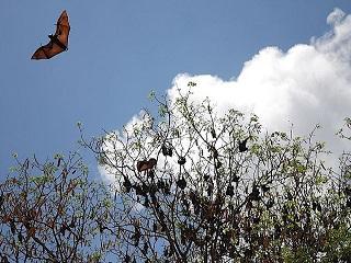 北美洲蝙蝠的生存危機