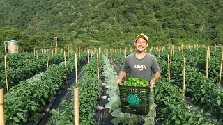 開啟  幸福農場─國家公園友善耕作的下一里路