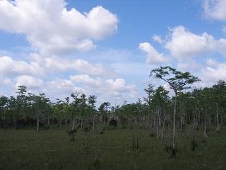 大柏樹國家保護區面臨的巨大麻煩