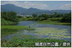 關渡重要濕地