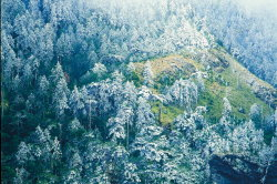 The Forest of Abies Kawakamii covered in frost ( by Chen Jhih-ming )